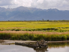 Potter Marsh-Anchorage (2) (moelynphotos) Tags: mountains alaska anchorage turnagainarm 137 138 pottermarsh moelynphotos