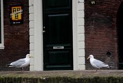 schiedam,boat trip (96) (bertknot) Tags: seagulls schiedam zeemeeuwen schiedamboattrip schiedamrondvaart rondvaartschiedam