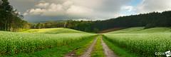 T-h-e-L-o-n-g-R-o-a-d (AnthonyGinmanPhotography) Tags: panorama japan panoramic fields soba nagano naganoprefecture novoflex omachi sobafields nakayamakohen