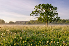 That Tree Again (jactoll) Tags: morning light mist misty landscape nikon meadow nikkor warwickshire lonetree alcester 1685mm d7000 jactoll