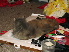 Isis helps with Carnivale Debauche costuming by laying on a whole mess of materials (benchilada) Tags: by cat mess with whole carnivale costuming isis helps materials laying debauche