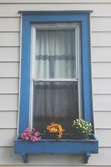 Ithacan window box (beckybarnett303) Tags: flowers window ithaca simple rlbphotography beckybarnett
