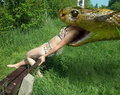 Alicia_Snake4 (tallteeth711) Tags: vore feet fetish legs damsel vorevids shoop snake fishvore toes nylons stockings