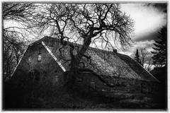 Old Barn (MartinFechtner-Photography) Tags: grafschaftbentheim nordhorn isterberg scheune baum tree barn black white schwarz weis film noir sony rx100 m4 mark4