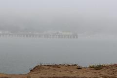 IMG_9390 (armadil) Tags: california beach fog dusk beaches mavericks californiabeaches