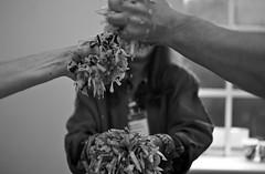 Squeeze! (The_Kevster) Tags: leica light bw food window monochrome vegetables hands arms bokeh chilterns buckinghamshire rangefinder sauerkraut workshop cabbage fermentation chesham masterclass summicron50mm lackandwhite leicam9 sandorellixkatz artoffermentation