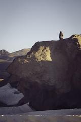 (RoX4NnE) Tags: trip travel viaje red tree beautiful stone de wonder landscape arbol desert flamingo salt paisaje el lagoon latinoamerica desierto laguna flamenco sal uyuni piedra suramerica colorada