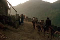 21-465 (ndpa / s. lundeen, archivist) Tags: road nepal people house mountain mountains color building men film animals wall rural 35mm walking village 21 hiking path donkeys nick hill hills trail stonewall dirtroad mountainside nepalese 1970s hillside 1972 mules himalayas villagers nepali dewolf mountainvillage ruralvillage nickdewolf photographbynickdewolf ridingadonkey reel21 hillyregion ridingamule