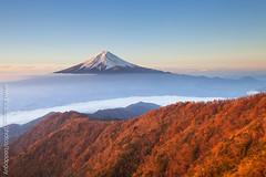 Mt Fuji in Autumn (baddoguy) Tags: morning autumn sky mountain japan fog forest volcano cone landmark images foliage clear getty fujisan mtfuji yamanashi kawaguchiko traveldestination