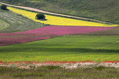 Turn right (luigig75) Tags: flowers italy canon landscape italia paesaggio umbria norcia castelluccio 70d tamronsp70300mmf456divcusd