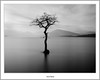 Milarochy Smooth (flatfoot471) Tags: rural landscape scotland blackwhite spring lochlomond stirlingshire milarrochybay millarochybay