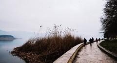 Winter (PattyK.) Tags: winter lake water europa europe january hellas lakeside greece balkans melancholy griechenland whereilive myphotos grece lakefront ilovephotography 2014 ellada ioannina giannina giannena epirus amateurphotographer  bythelake ipiros pamvotida lovelycity   jannina jannena       lakepamvotida ioanninalake     nikond3100
