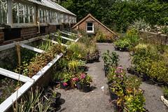 Huh? (hehaden) Tags: plants gardens sussex greenhouse bordehill