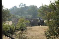 Southafrica-Krueger_Park_3_10 (Alf Igel) Tags: africa park southafrica south national afrika südafrika krueger süd krüger