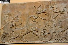 Lion Hunting Scene, Ashurnasirpal II (Sumer and Akkad!) Tags: b museum king room iraq lion british throne mesopotamia hunt assyrian ashurnasirpal nimrud kalhu northwestpalace calah