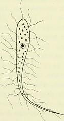 Endoplasma Endoplasma