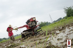 Araro 04 (Soil Cultivation) (ilusyonimages) Tags: street asian photography asia rice farmers farm traditional philippines farming images soil illusion crop filipino cultivation handtractor ilusyon riefields