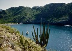 Las Cocinas Cove (malcolmharris64) Tags: ocean sea cactus green sonora mexico boats sailing cruising anchorage sancarlos coves alajuela sajuaro