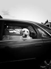Sad Dog 7-24-14 (a.achten) Tags: