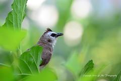 (me.studio) Tags: bird mestudio micarttttworldphotographyawards micartttt