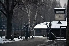 Auschwitz (013)
