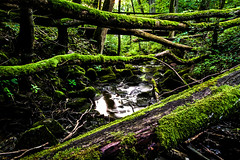 Fallen Trees (EmilJoh) Tags: trees tree green water rock stone forest silver moss rocks stream sweden hiking stones drought sverige greenplants hdr highdynamicrange brigde greenleaf hikingtrail skvde greenmoss greentrees greenleafs silverfallet