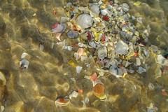 (bumblebee66) Tags: water colorful wasser surface seashell bunt muscheln oberflche wellig wavily