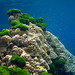 corals     IMG_0605bs
