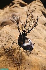 SeaFan19 (mcshots) Tags: ocean california travel sea summer usa beach nature water coast rocks stones stock sealife boulders socal geology mcshots swells tidepools losangelescounty seafan