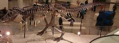 Tyrannosaurus rex theropod dinosaur (Hell Creek Formation, Upper Cretaceous; near Faith, northwestern South Dakota, USA) 1 (jsj1771) Tags: creek dinosaur south hell formation rex dakota tyrannosaurus cretaceous theropod