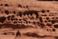 Art by nature (im_fluss) Tags: wood sandstone rocks forrest alteration dahn felsen felsenburg pflzerwald verwitterung palatinate buntsandstein