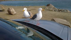 Gulls_from_outside (jnspet) Tags: gull gulls seagull seagulls bird birds humor amusing brash phoneography cameraphone lumia1020 lumia nokia reflection pair