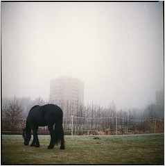 .hunt for the breeze, get a midnight meal (Herr Benini) Tags: analog kiev88 mediumformat horse fog nebel nebbia cavallo pferd winter 6x6