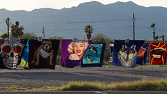 wrapped up in marilyn (what's_the_frequency) Tags: marilynmonroe marilyn wrap blanket vendor streetvendor wolf miamiheat bulldog skull mojave mojavedesert mohavecounty fortmohave arizona calnevari wednesday march winter 365 365pic project365