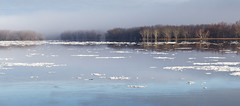 St. John River (Boganeer) Tags: snow ice water fog river forest forêt trees freshet stjohnriver wulastuq thaw nature newbrunswick nouveaubrunswick blue maritimes maritime atlanticcanada canada canon canont3i canoneos canonrebelt3i canon600d silvermaple acer