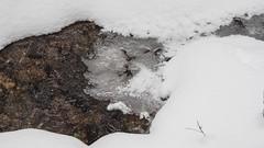 frozen (SpotShot) Tags: todtnau badenwürttemberg deutschland sony a7 ilce7 sonya7 minolta 85mm mc rokkor f17 mcii 85 minoltamcrokkor85mmf17 cold kalt snow schnee white weis ice eis back creek frozen gefroren