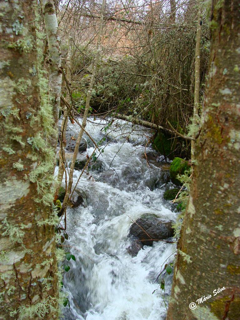 Águas Frias (Chaves) - ... a água corre com abundância por entre as árvores ...