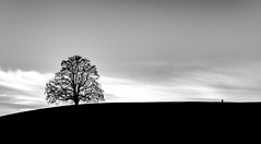 Together lonely (Tim RT) Tags: tim rt lonely black white bw monocrome einfarbig tree people landscape clouds solitary beautiful together nature visual mind friedenslinde germany bronnweiler fuji fujifilm xt xt2 xf1024mm outdoor
