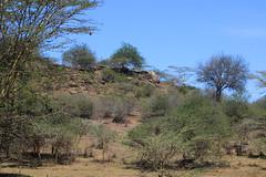 LANDSCAPE AT HIPPO POOL, NAIROBI GAME PARK, KENYA 2014 (nordique72) Tags: animals landscape kenya nairobi lion zebra giraffe baboon wildebeast eland waterbuffalo warthog gamepark whiterhinoceros egyptiangoose osterich masaigiraffe ngonghills acaciatree thompsonsgazelle velvetmonkey crownbird animalsofkenya hardebeast maracoustork