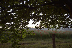CHASING BOUNDARIES (DESPITE STRAIGHT LINES) Tags: morning trees cloud tree brick nature beauty leaves sunrise fence river landscape dawn countryside kent am nikon flickr day post railway foliage poppy poppies naturalbeauty boundary mothernature lullingstone goldenhour d800 firstlight riverdarent eynsford coquelicots poppyfield thegoldenhour paulwilliams lowlightphotography outdoorphotography sunrisephotography nikon2470mm nikkor2470mm nikond800 eynsfordvillage despitestraightlines eynsfordkent theeynsfordviaduct batballstation sevenoaksrailway lullingstonevillage sunriseovereynsford ilobsterit