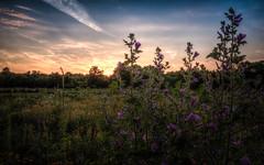 Wildblumenwiese #8