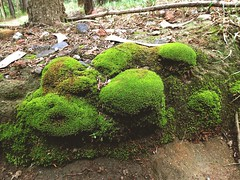 Moss II (Salticinats) Tags: plants green forest moss natural mosses