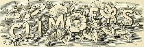 """Image from page 113 of """"Vick's floral guide for 1875"""" (1875)"""