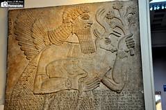 A Protective Spirit Carrying a Deer (Assyria, Babylon, Akkad, Sumer...) Tags: iraq sage deer ii nineveh mesopotamia assyria ashurnasirpal nimrud apkallu northwestpalace protectivespirit
