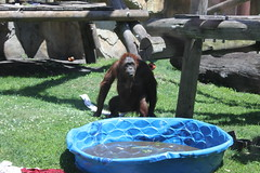 IMG_1754 (sambhensley) Tags: eos zoo toledo 50d caonon