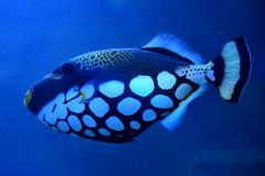 A Sleepy Fish (pringle-guy) Tags: fish london animals nikon sealife londonaquarium
