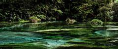 Te Waihou Springs (batestracey) Tags: blue water springs freshwater tewaihou newzealandlandscapes