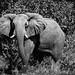 Camp_Old_Bolds_Okavango_Delta_2 (315 von 456)-Bearbeitet