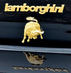 1988 Lamborghini Jalpa (Adventurer Dustin Holmes) Tags: emblem logo 1988 lamborghini carshow carshows 2014carshow 2014carshows