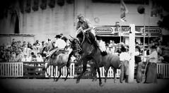 El encuentro (Eduardo Amorim) Tags: horses horse southamerica criollo caballo uruguay cheval caballos cavalos prado montevideo pferde cavalli cavallo gauchos pferd chevaux gaucho  amricadosul montevidu uruguai gacho amriquedusud  gachos  suramrica amricadelsur sdamerika crioulo caballoscriollos criollos jineteada  americadelsud gineteada crioulos cavalocrioulo americameridionale caballocriollo campeiros campeiro eduardoamorim cavaloscrioulos pasomolinosudamrica